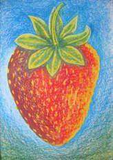 Erdbeere - Fragaria x ananassa