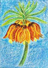Kaiserkrone - Fritillaria imperialis