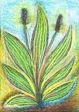 Spitz-Wegerich - Plantago lanceolata