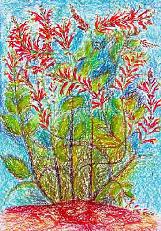 Ananas-Salbei - Salvia elegans