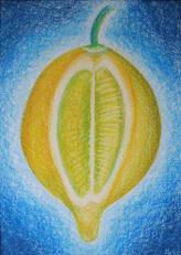 Zitrone - Citrus x limon