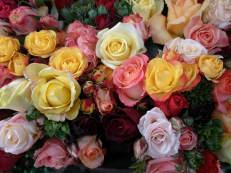 Freilandrosen - Rosa species