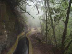 Levada im Nebel