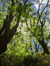 Mai im Kastanienwald