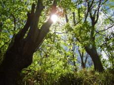 Mittagssonne im Kastanienwald