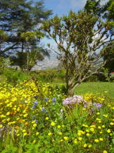 Blandy's Garden, Madeira