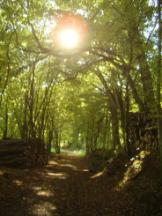 Waldbelichtung