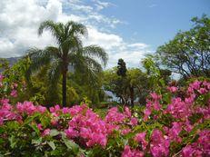Santa Catarina Park, Funchal