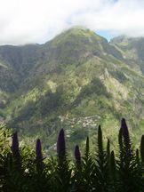 Madeira-Natternkopf, Curral das Freiras