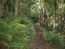 Farnwald in Funduras, Madeira