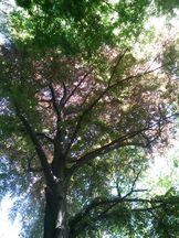 Regenbogenwald