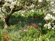 Frühling unterm Zierapfelbaum